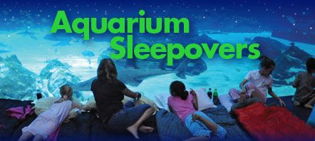 GEORGIA AQUARIUM SLEEPOVER 2018